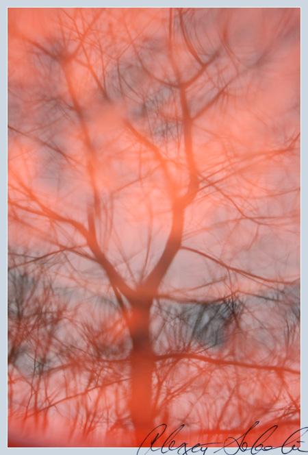 tree reflection2